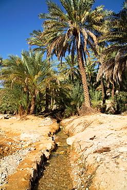 Oman  Wadi Bani Khalid.