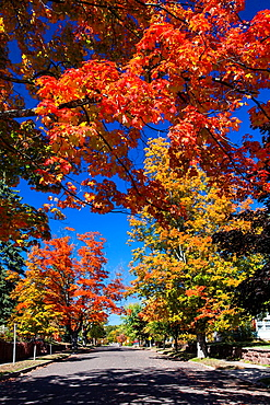 A street with fall foliage color in the maple trees in Bayfield, Wisconsin, USA