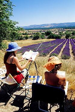 painters in lavender field around Ferrassieres, Drome department, region of Rhone-Alpes, France, Europe