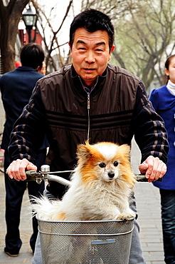 Man with dog in a bycicle, Nan Lou Gu Xiang Hutong, Beijing, China, Asia