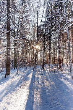 Forest in winter, in Saxon Switzerland, Elbe Sandstone Mountains, Saxony, Germany, Europe