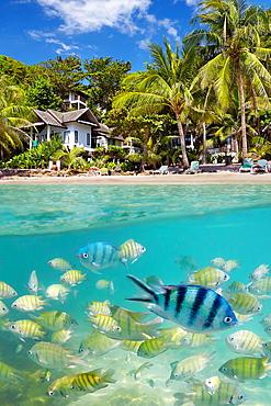 Thailand, underwater sea view of small fish at Ko Samet Island, Thailand, Asia