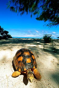turtle on a beach, Bird Island, Republic of Seychelles, Indian Ocean