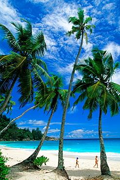 Baie Intendance beach, Mahe island, Republic of Seychelles, Indian Ocean