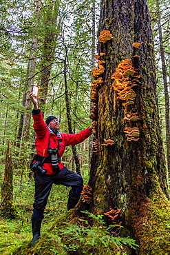 Lindblad Expeditions guests photographing mushrooms in Williams Cove, Tracy Arm, Southeast Alaska, USA.