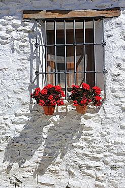 Flowers in the window. Mecina-Fondales, Las Alpujarras. Granada, Spain