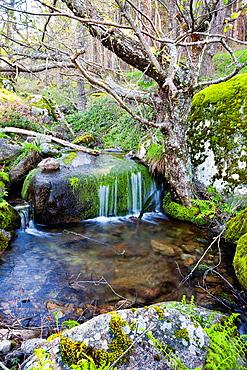 Graja gorge in the Sierra de Gredos. Piedralaves. Avila. Castilla Leon. Spain.