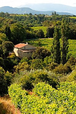 France Drome Provence Landscape around Rousset-les-Vignes village