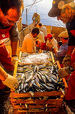 fishermen unloading the catch, in fishing port of Adra. Almeria province, Andalucia, Spain.