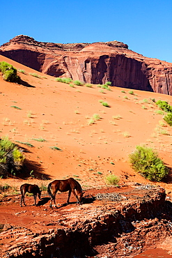 Wild Horses in Monument Valley, Arizona, USA.