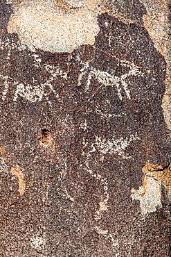 Rock Art in Saguaro N.P, Arizona, USA.