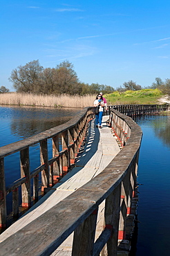 Tablas de Daimiel National Park, Ciudad Real-province, Castilla, La Mancha, Spain, Europe.