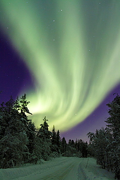 Aurora borealis, Northernlight over winter forestroad with snow on the trees in Gallivare in Swedish lapland.