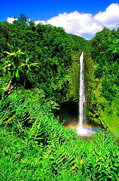 Lush vegetation framing Akaka Falls, Akaka Falls State Park, The Big Island, Hawaii USA.