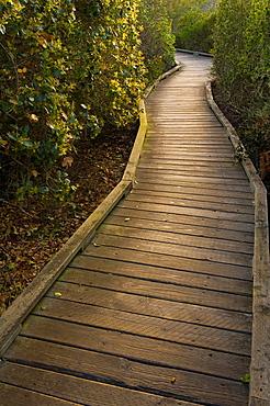 Wooden Boardwalk path walking trail through the El Moro Elfin Forest Natural Area, Los Osos, California.