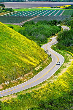 Country road curves through green hills and agriculture valley is Spring, near Lompoc, Santa Barbara County, California.