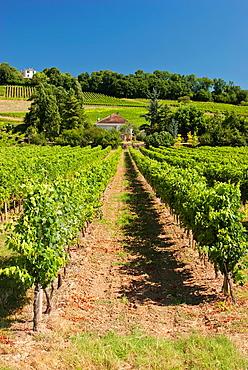 Vineyards aroud Bordeaux
