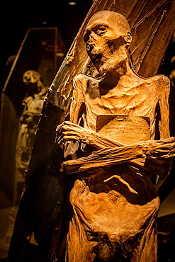 Museum of the Mummies, Guanajuato, state Guanajuato, Mexico.
