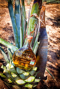 Tequila Orgullo de Penjamo, Penjamo, Guanajuato, Mexico.