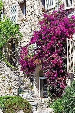 Europe, France, Alpes-Maritimes, Saint-Paul-de-Vence. Facade covered of bougainvillea.