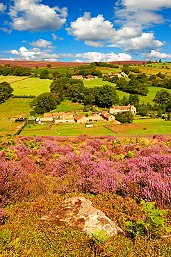Heather blooming on the Eskdale valley moor. Castleton , Eskdale, North Yorks National Park, North Yorkshire, England.