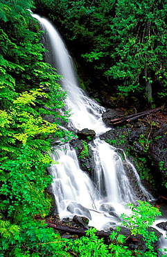New spring growth around cascade on Falls Creek, Mount Rainier National Park, Washington USA.