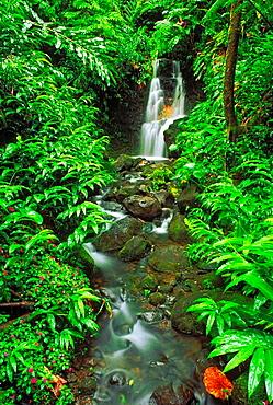 Lush vegetation and cascade along the Akaka Falls Trail, Akaka Falls State Park, The Big Island, Hawaii USA.