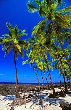 Coconut palms on sand and lava beach at Pu'uhonua O Honaunau National Historic Park, Kona Coast, Hawaii USA.