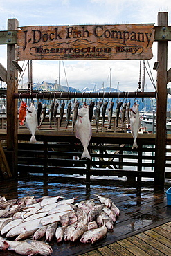 Catch of the day, fish hanging on a pier, Seward, Alaska, United States of America.