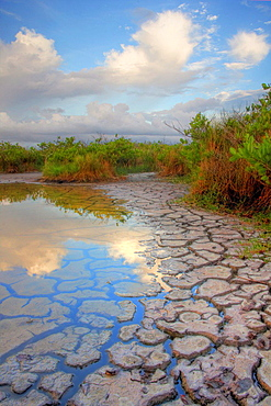 Cracked mudflat and cloud reflection among mangroves, Florida, USA.