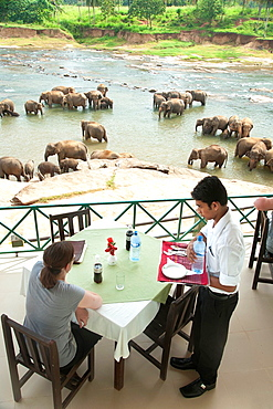 Tourist watches Asian elephants bathing in the river from a cafe, Pinnawela, Sri Lanka, Indian Ocean, Asia.