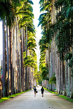 Botanical Gardens, Rio de Janeiro, Brazil