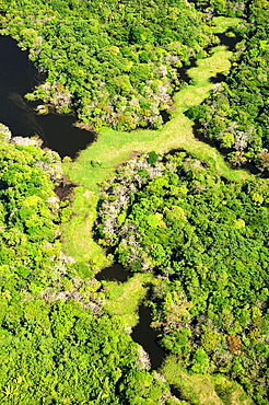 Flooded Forest, Anavilhanas Archipelago, Rio Negro, Amazonia, Brazil