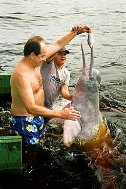 Tourist feeding wild Boto, Amazon Dolphin, Rio Negro, Amazonia, Brazil