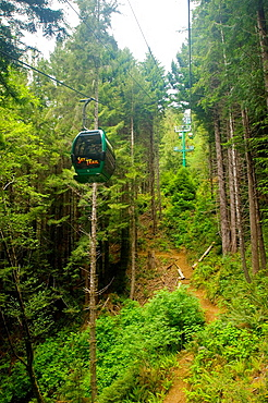 The Sky Trail gondola ride through redwood forest, Trees of Mystery, Del Norte County, California.