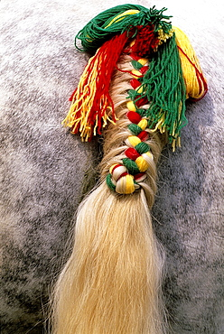 braided horse tail, Regional Natural Park of Perche, Orne department, Lower Normandy region, France, Western Europe.