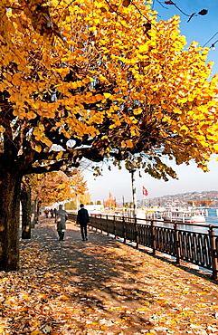 plane-trees, autumn colors, Quai du Mont-Blanc promenade, one of main streets in Geneva on a shore of Geneva Lake, Geneva, Switzerland, Europe