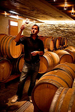 Cyril Séverin, winemaker and owner of the winery Domaine de Daley in the Interior of cava in Lavaux. Lausanne, Vaud, Switzerland, Europe.