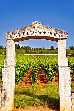 jean michel chartron in poligny-montrachet.
