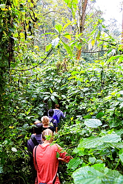 tourists on their way to the gorillas in Bwindi Impenetrable forest, Uganda