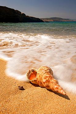 Seashell on the beach, Naxos, Cyclades Islands, Greek Islands, Greece, Greece, Europe.