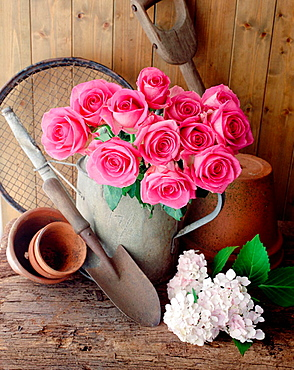 Garden still life with pink roses in late July, Hertfordshire, UK
