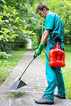 Gardener applying herbicide with bell sprayer.