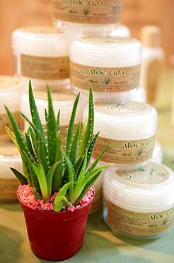 Aloe vera at Bioterra Naturall (Organic products, bioconstruction, renewables energies, and efficient consumption fair), Ficoba, Irun, Basque Country, Spain