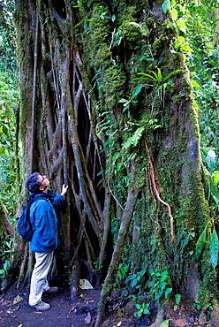 Reserva Biologica Bosque Nuboso Monteverde, Puntarenas, Costa Rica