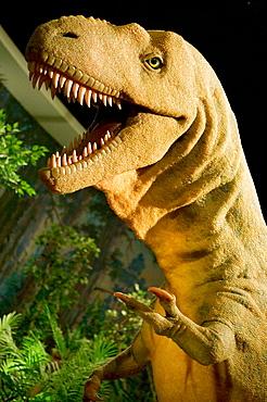 Life size Albertosaurus at Royal Tyrrell Museum of Paleontology, Drumheller, dinosaur town, Alberta, Canada
