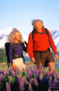 Senior couple hiking in lupine field, Chugach National Forest, Alaska, USA