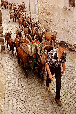 Descent from Alps pastures, Festa della Desnalpa, Settimo Vittone, Piedmont, Italy.