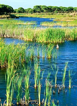 Laguna El Acebuche, Donana National Park, Huelva, Andalucia, Spain.