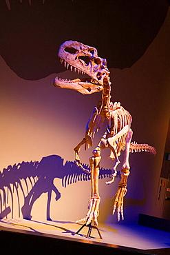 Monolophosaurus, Royal Tyrrell Museum of Paleontology, Drumheller, Alberta, Canada